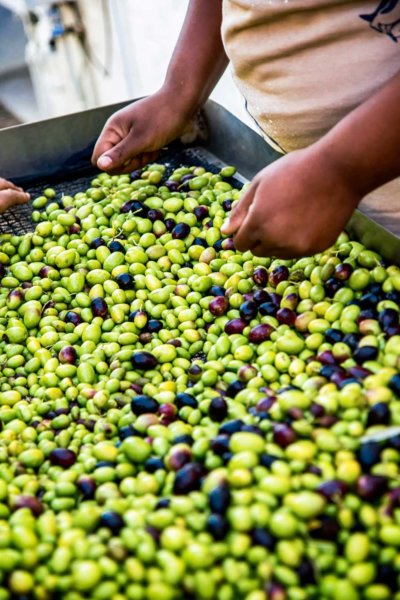 Production of Extra Virgin Olive Oil & Olive Products on Ouderwerfskloof Farm