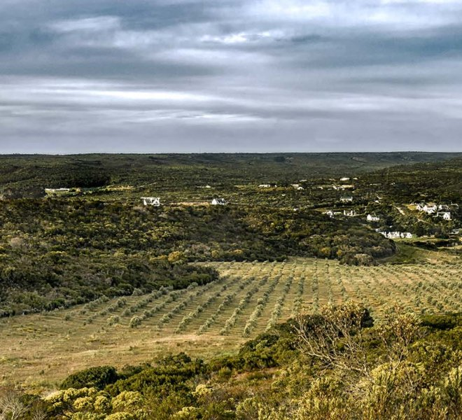Oudewerfskloof Olive Farm and Surrounding Area