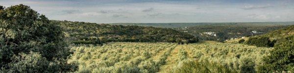 Oudewerfskloof Olive Farm
