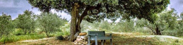 Oudewerfskloof Olive Farm in Stilbaai