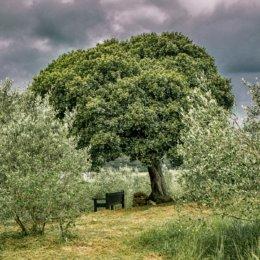 Wonderful Olive Farm Experience